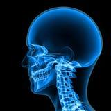scheletro Fotografia Stock
