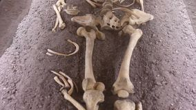 scheletro archivi video