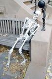 scheletro Fotografie Stock Libere da Diritti