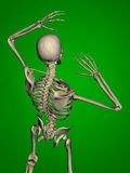 scheletro Immagine Stock