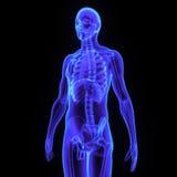 Scheletro con il lato di corpo Immagini Stock Libere da Diritti