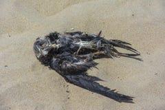 Scheletro da un uccello sulla spiaggia Fotografia Stock Libera da Diritti