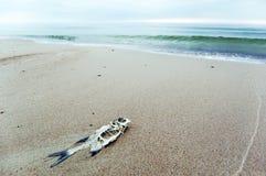 Scheletro dei pesci Fotografie Stock Libere da Diritti