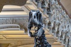 Scheletro del cranio di Trex immagini stock