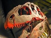 Scheletro del dinosauro Immagini Stock Libere da Diritti