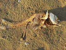 Scheletro del pesce Fotografia Stock