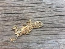 scheletro del rettile Fotografia Stock