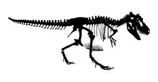 Scheletro del rex di tirannosauro Vettore della siluetta Vista laterale Immagini Stock Libere da Diritti