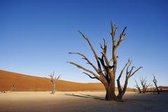 Scheletro dell'albero Immagine Stock Libera da Diritti