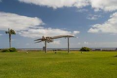 Scheletro della balena Fotografie Stock