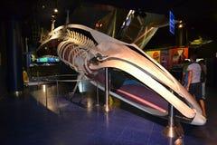Scheletro della balena, Oltremare Italia Fotografia Stock Libera da Diritti