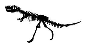 Scheletro della famiglia di isanensis di Siamotyrannus di Tyrannosauridae su fondo isolato Vettore Progettazione piana Fotografia Stock Libera da Diritti