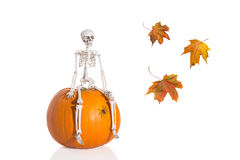 Scheletro di Halloween Immagini Stock