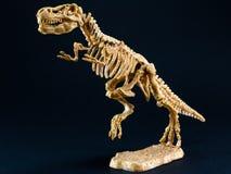 Scheletro di tirannosauro T Rex del dinosauro su fondo nero immagine stock