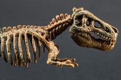 Scheletro di tirannosauro T Rex del dinosauro su fondo nero fotografia stock