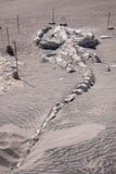 Scheletro fossile della balena Fotografie Stock Libere da Diritti