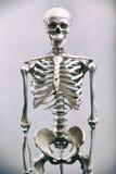 Scheletro umano Fotografia Stock Libera da Diritti