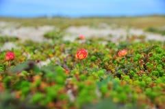 Schellbeernahaufnahme auf einem Hintergrund des Meeres Lizenzfreies Stockfoto