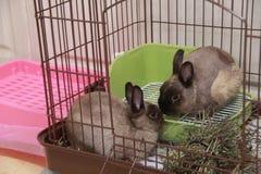 Schelo Юра rabbit2 Стоковые Изображения RF