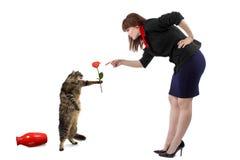 Schelten einer Katze Lizenzfreie Stockbilder