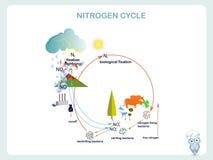 Schema del ciclo dell'azoto, progettazione piana royalty illustrazione gratis