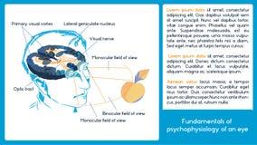 Schema di Infographic Fondamenti di psicofisiologia di un occhio Fotografia Stock