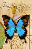 A schematic drawing of a butterfly. Stock Photography