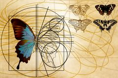 A schematic drawing of a butterfly. Stock Photos
