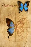A schematic drawing of a butterfly. Royalty Free Stock Photo