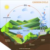 Scheme of the Carbon cycle, flats design Royalty Free Stock Photos