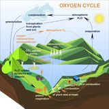 Scheme of the Oxygen cycle, flats design Royalty Free Stock Images