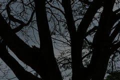 Schemering De zonsondergang tot de hemel is donker met de schaduw van de boom Royalty-vrije Stock Afbeeldingen