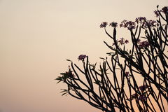 Schemering De zonsondergang tot de hemel is rood met de schaduw van de boom Royalty-vrije Stock Afbeeldingen