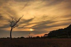 Schemeringhemel over weide met silhouet droge boom Stock Afbeelding