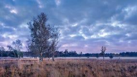Schemeringscène bij een rustige heide, Nederland stock foto's