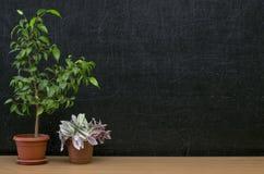 Scheren und Bleistifte auf dem Hintergrund des Kraftpapiers Zurück zu Schule-Konzept Lehrer- oder Studentenschreibtischtabelle Lizenzfreie Stockbilder