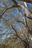 Schermi degli alberi Fotografia Stock