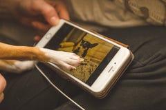 Schermo commovente del telefono della chihuahua Immagine Stock Libera da Diritti