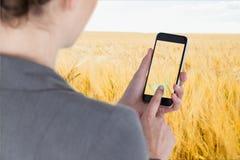 Schermo commovente dello smartphone della donna di affari contro il fondo del giacimento di grano Immagine Stock
