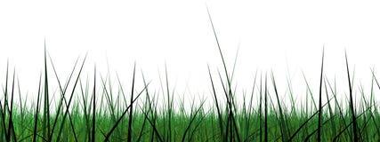 Schermo largo del bordo dell'erba Fotografia Stock Libera da Diritti