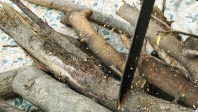 Scherp droog hout stock video