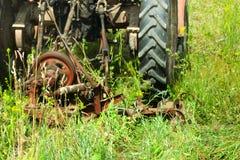 Scherp gras stock afbeelding