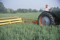 Scherp het hooigebied van de landbouwer Stock Afbeelding