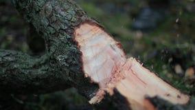 Scherp hout met bijl stock video