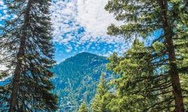 Scherpe die bergpiek door weelderige groene bomen in Montana wordt ontworpen Royalty-vrije Stock Foto's