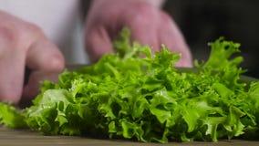 Scherpe het messen natte verse groene salade van de chef-kok De voorbereiding van het voedsel Langzame Motie stock video