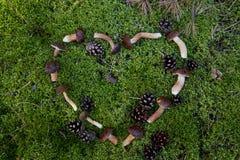 Scherpe paddestoelen in het bos Royalty-vrije Stock Foto's