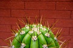 Scherpe stekels op cactus royalty-vrije stock afbeeldingen