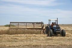 Scherpe tarwe in het Swartland-gebied Zuid-Afrika stock foto's
