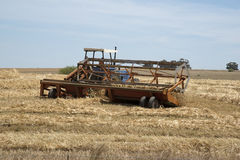 Scherpe tarwe in het Swartland-gebied Zuid-Afrika Royalty-vrije Stock Foto's